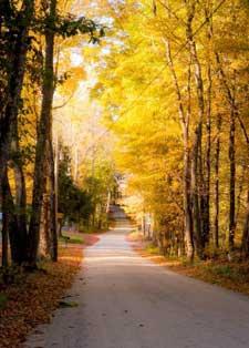 Road to Pratt Cemetery, Mason, NH